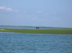 wild horse shackleford banks nc